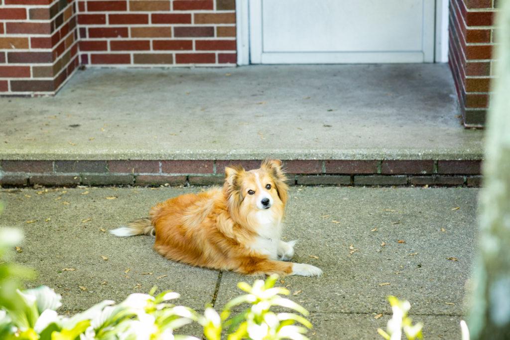 Pets I Meet During Real Estate Shoots, Part 2